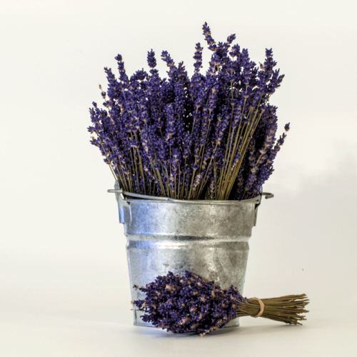 Dried Lavender Bouquet English