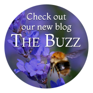 The Buzz Blog