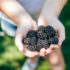 Oregon Blackberry Lavender Personal Care